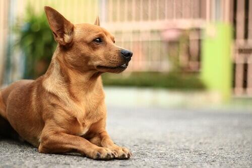 Le malattie della pelle più comuni nei cani