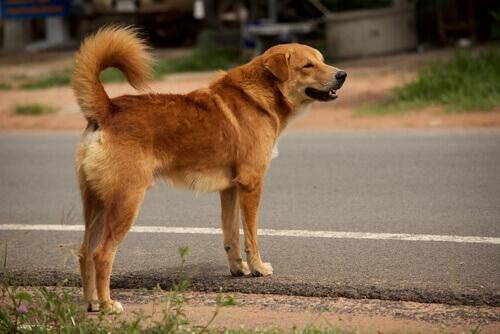 Come richiedere un risarcimento se il vostro cane viene investito