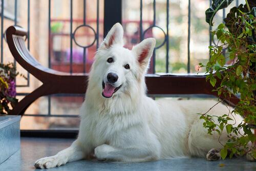 Le precauzioni per i vostri cani se avete un balcone