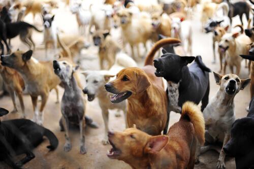 Tekis: l'uomo che ha salvato più di 200 cani abbandonati in Grecia
