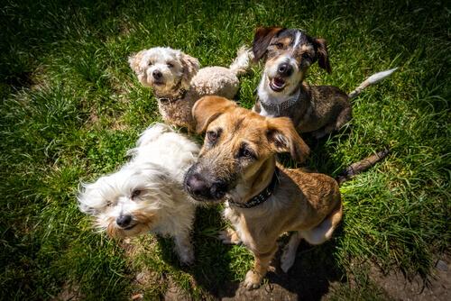 Le cose che ogni cane deve fare: non umanizziamoli!