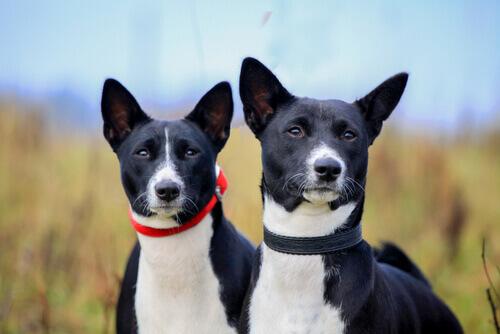 Come proteggere le orecchie del vostro cane in estate