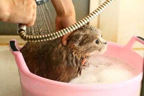 Ogni quanto fare il bagno al proprio gatto?