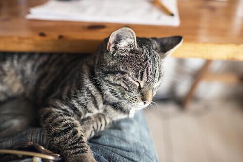 Che cosa fare in caso di avvelenamento del gatto
