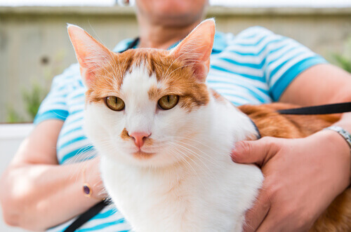 I gatti adorano stare con i loro padroni