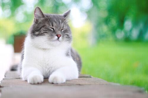5 cose che possono rendere felice un gatto