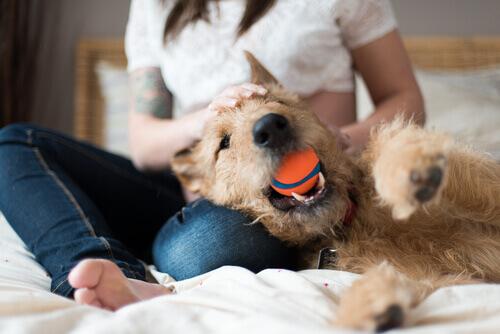 Come insegnare al cane a riportare la palla