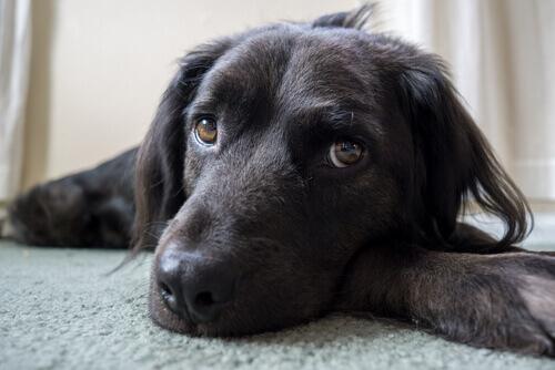Sei cose che credete piacciano al vostro cane, ma non è così