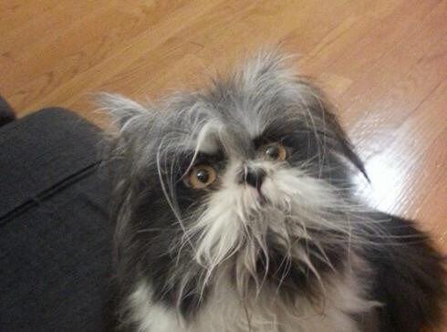Lo strano animale apparso su Twitter: cane o gatto?
