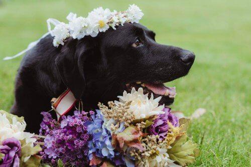 Cane con tumore al cervello muore dopo il matrimonio della sua padrona