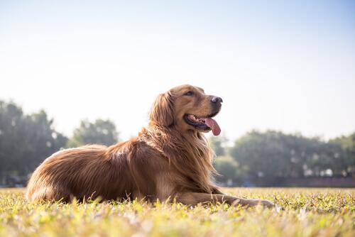 Capire se un cane sta bene osservando le sue feci