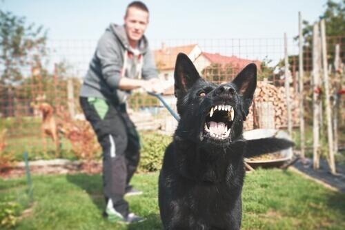 Come educare un cane potenzialmente pericoloso?
