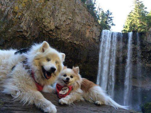 Il cane cieco accompagnato da un cane guida