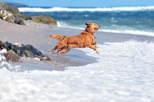 Cane salta sulla spiaggia