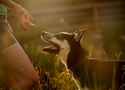 Cani che proteggono le donne vittima di violenza