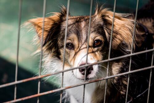 Ecco il cane che aiuta a raccogliere fondi per i rifugi per animali