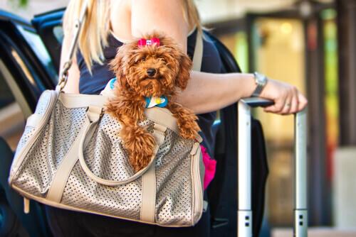 Viaggiate con il vostro cane? Non perdetevi queste app!