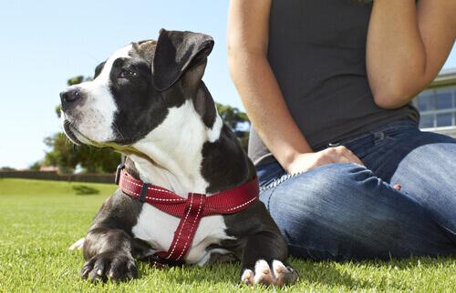 Avere un cane migliora la salute mentale e fisica