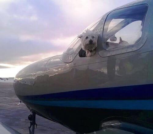 Conoscete Wings of Rescue, i piloti volontari che salvano la vita dei cani