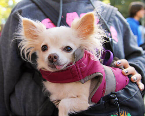 Cani adottati all'estero