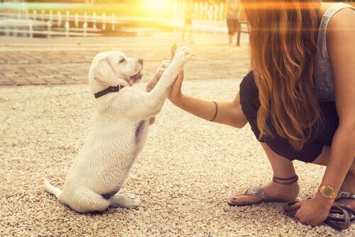 Può un cane essere mancino?
