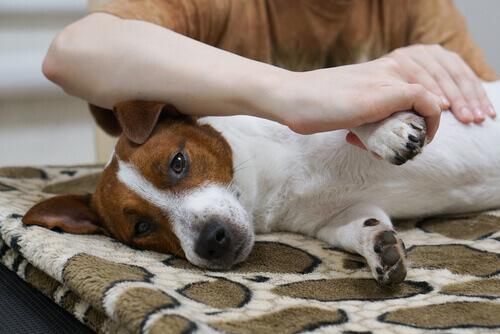 Sapete come fare un massaggio al vostro cane?