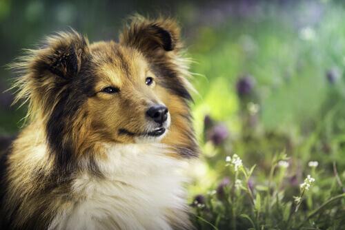 10 consigli per allevare un cane equilibrato