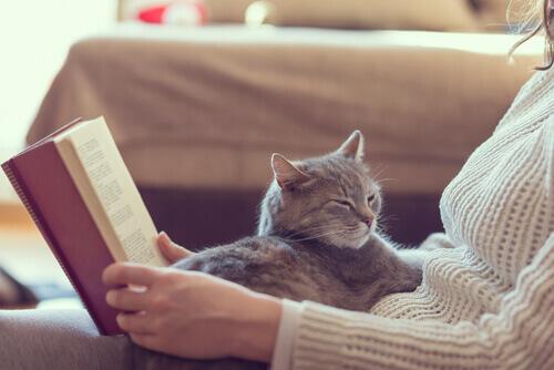 10 vantaggi di vivere con un gatto in casa