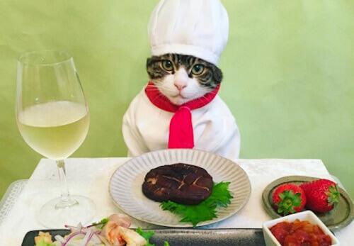 Il gatto Maro, le reti sociali e il suo profilo Instagram