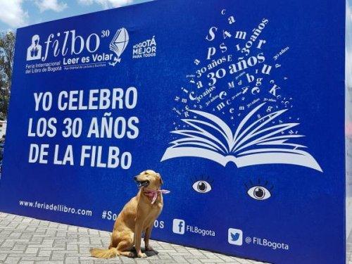 Guacharaca, la cagnolina scrittrice