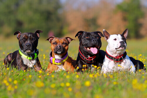 I cani possono riconoscere i propri familiari