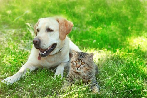 Perché i cani e i gatti possono essere amici?