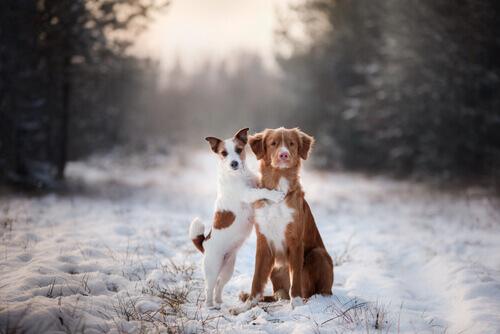 Non obbligate il vostro cane a camminare su due zampe