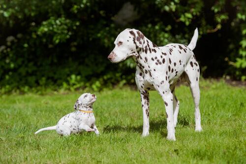 Vi presentiamo i 9 cani più belli del mondo