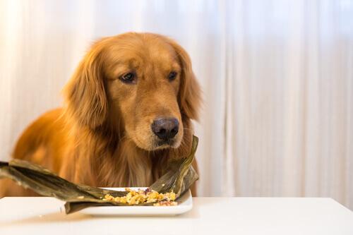 Sapete che esiste il cibo surgelato per cani?
