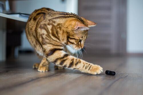 Perché i gatti adorano buttare tutto per terra?