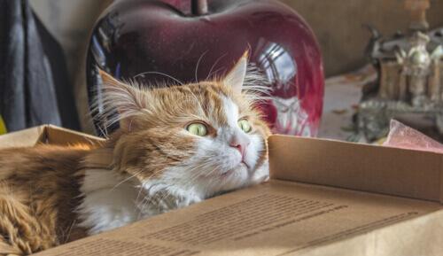 Un trasloco non deve essere un trauma per il vostro gatto