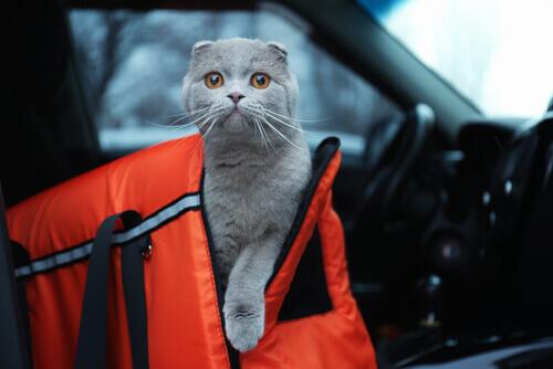 Precauzioni per viaggiare in macchina con il nostro animale domestico