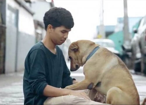 Un giovane dona abbracci ai cani randagi