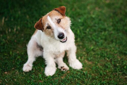 i dieci consigli per allevare un cane equilibrato