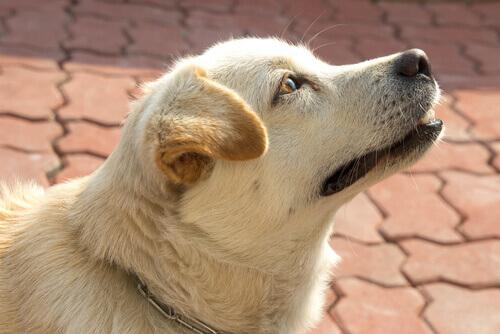 I cani sanno che ore sono? Sì, grazie al loro olfatto