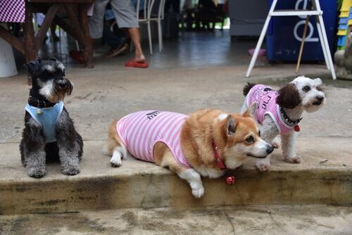 7 stravaganti razze di cani che adorerete