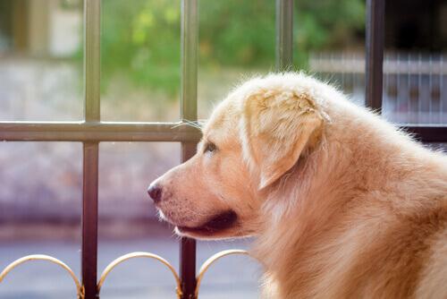 George Clooney dona 10.000 dollari per salvare dei cani