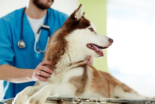 Castrare un cane: vantaggi e svantaggi