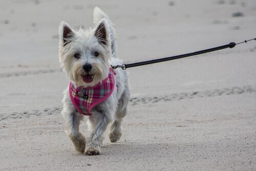 Passeggiare con il cane: gli errori da non fare