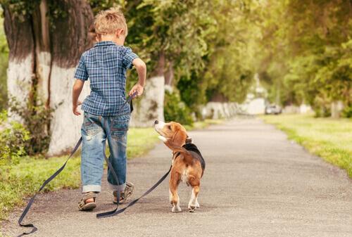 bambino con beagle al guinzaglio