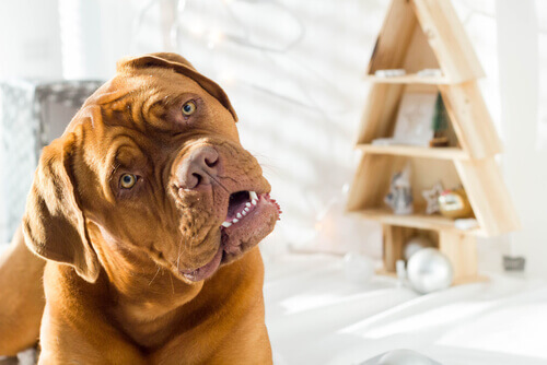 Perché i cani piegano la testa quando gli parlate?
