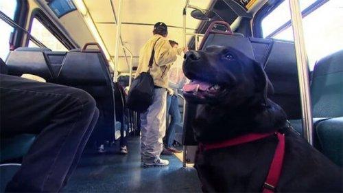 Eclipse, il cane che va da solo al parco