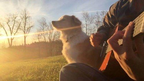 uomo suona la chitarra sul prato con cane