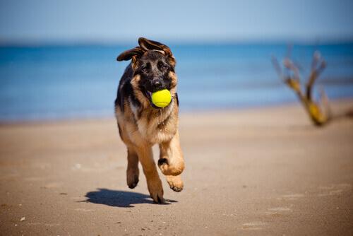 cane sportivo olio di oliva